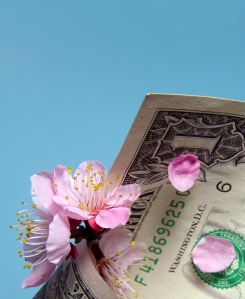 Cherry flowers and dollar